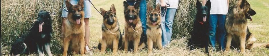 Eikelberg Shepherds | Breeding quality West German Shepherds
